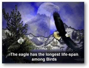 eagle-post1