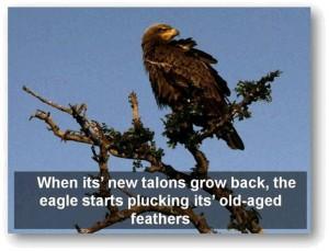 eagle-post10