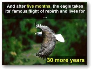 eagle-post11