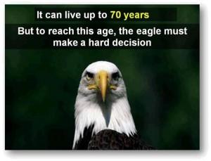 eagle-post2