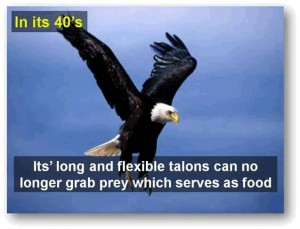 eagle-post3