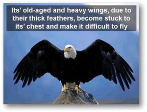 eagle-post5