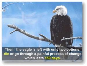 eagle-post6