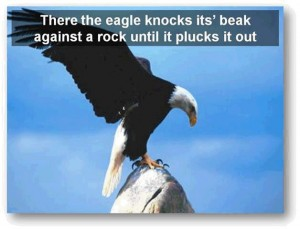 eagle-post8