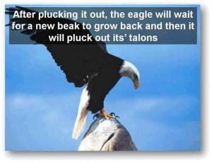 eagle-post9