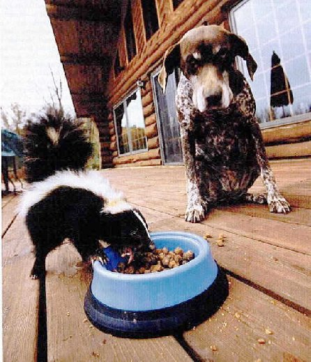 Eliminating Skunk Odor From Your Dog With An Easy Home Remedy